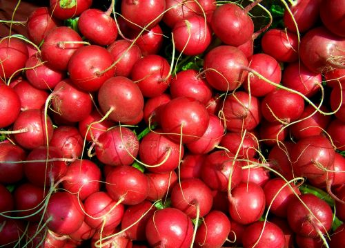 radish red radish vegetables