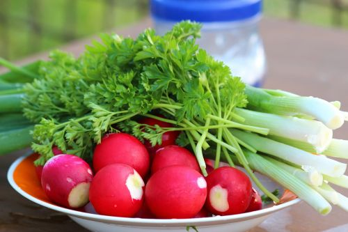 radishes plate red