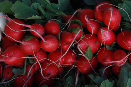 radishes food red