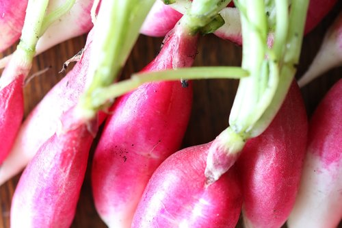 radishes  radish  red