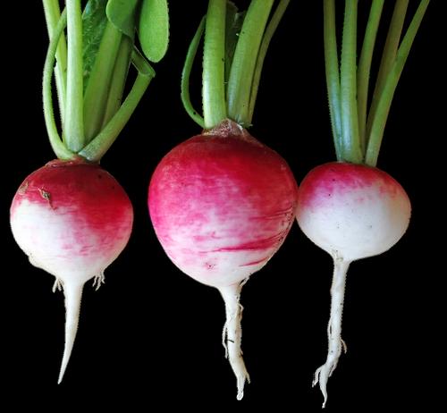 radishes  vegetables  food