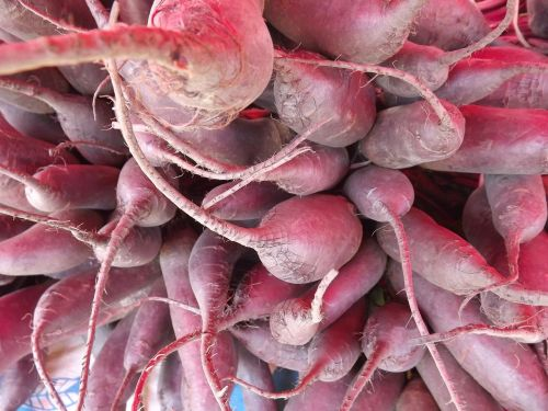 radishes vegetable roots