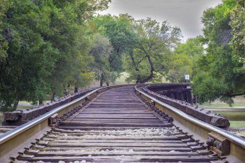 rail road trees rail