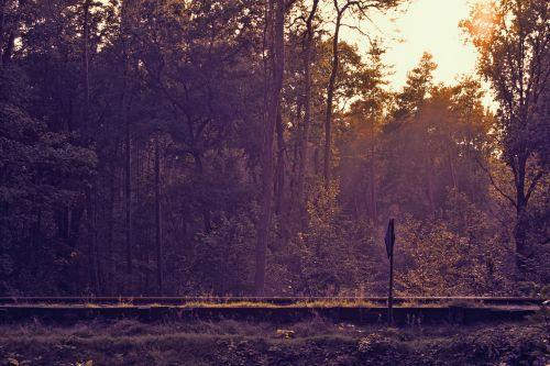 Railroad In Wood