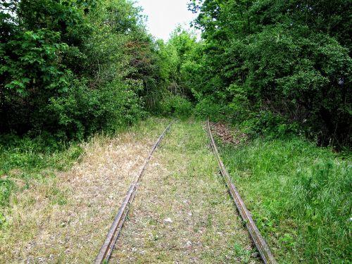 rails overgrown railroad tracks