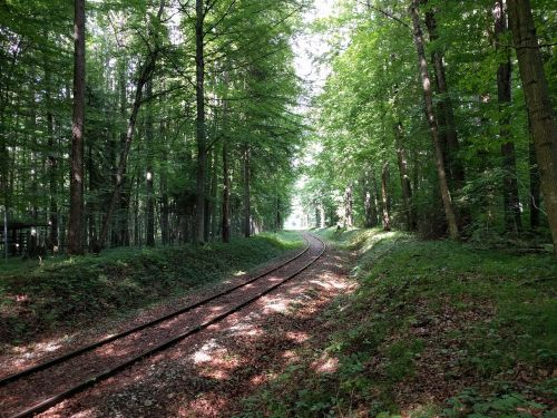 railway leave forest