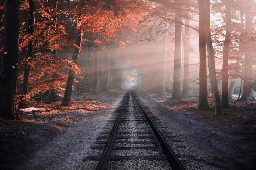 railway forest sleepers