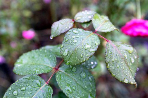 rain drops plant