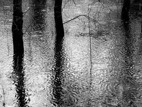 rain forest black and white