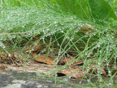 rain morgentau grass