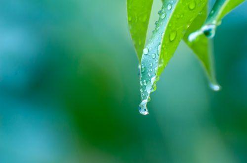 rain drops macro