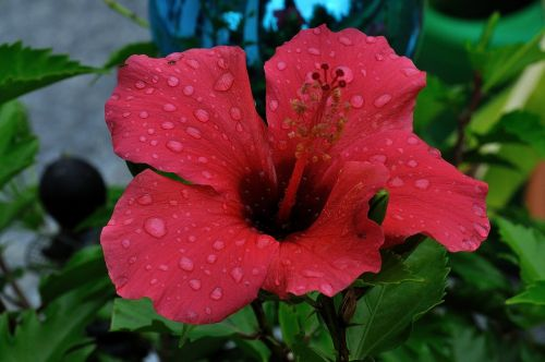 rain hibiscus flower beaded