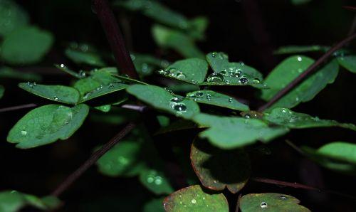 rain water drop of water