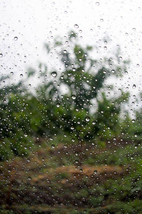 rain autumn nature