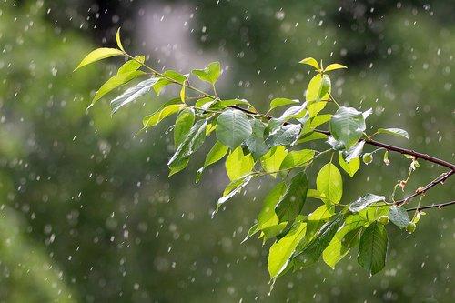 rain  weather  precipitation
