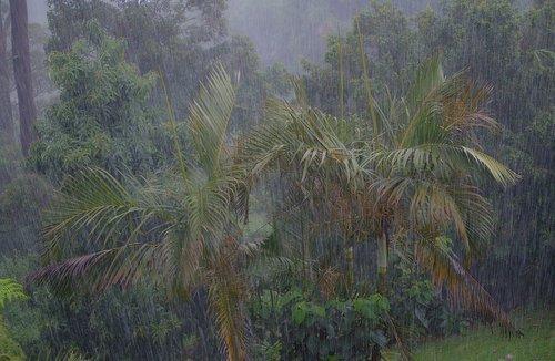 rain  rainfall  storm