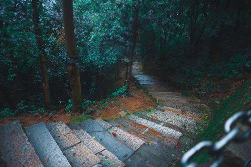 rain  plank  forest