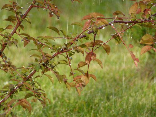 rain rainy weather leaf