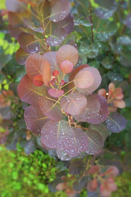 lietus,augalas,žalias,gamta,rasa,lašai,lietaus lašai,šlapias,lauke,oras,aplinka