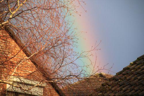 rainbow bright contrasts