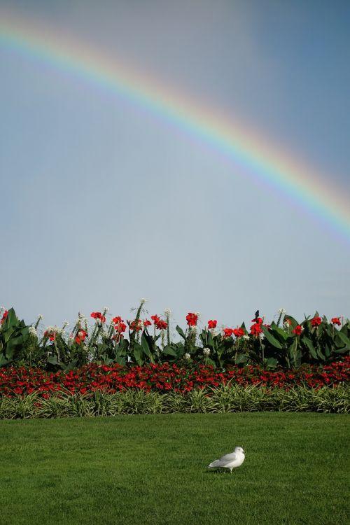 rainbow seagull meadow