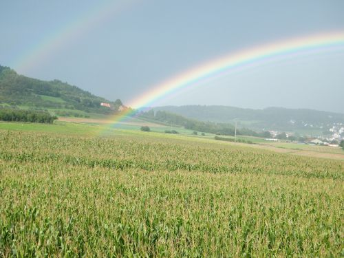 rainbow cornfield hill