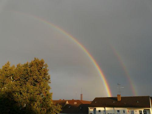 rainbow half transient