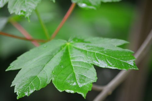 raindrop foliage forest