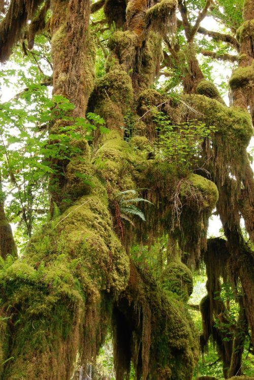 rainforest branch tree
