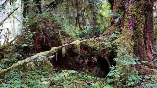 rainforest national park usa