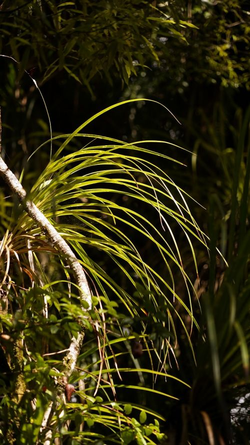 rainforest grass back light