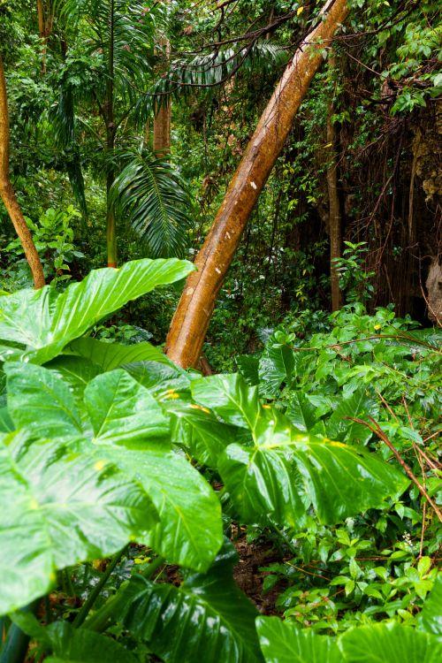 Rainforest Vegetation