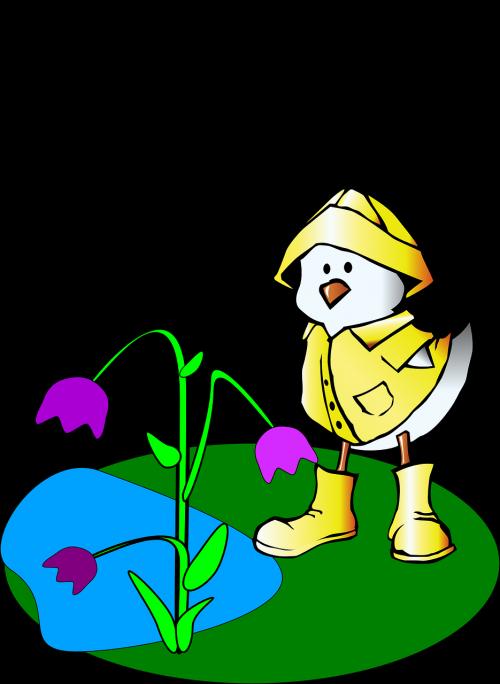 raining outdoors duck