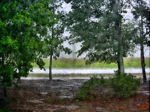 raining trees forest