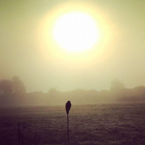raising sun falcon prairie