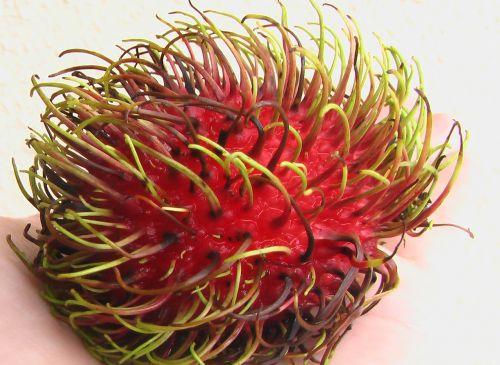 rambutan ngo fruit
