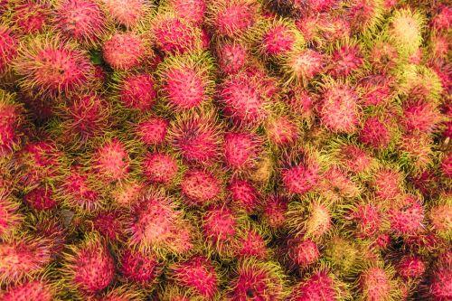 rambutan fruit malaysia