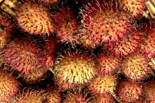 rambutan hairy litchi fruit