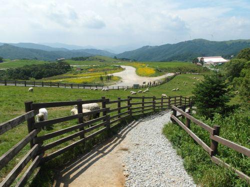 ranch landscape republic of korea