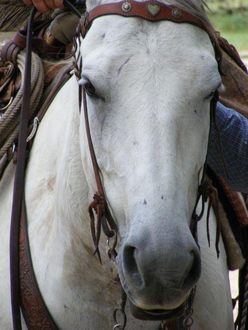 Ranch Horse 2