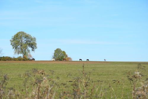 rand ecker maar autumn horses