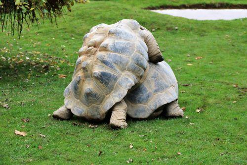 randy tortoise wildlife animal