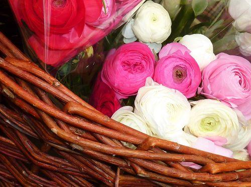 ranunculus spring flowers