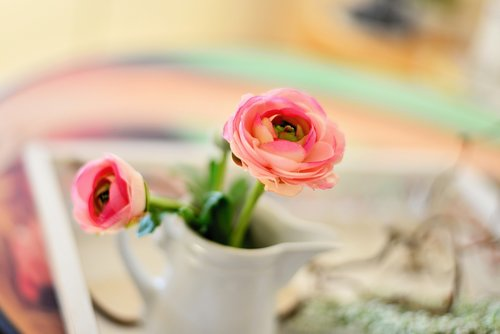 ranunculus  blossom  bloom