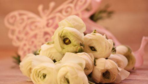 ranunkeln flowers cheerful