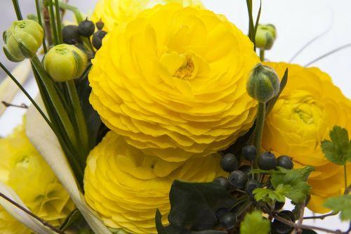 ranunkeln flowers spring
