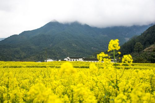 rape wuyuan mountain