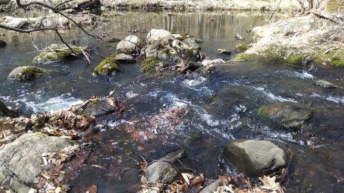 rapids water stream