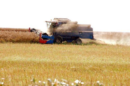 rapsernte combine harvester agriculture