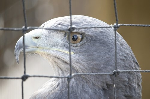 raptor  bird of prey  bird